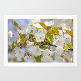 Spring Flora Art Print