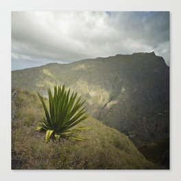 Agave King Canvas Print