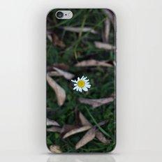 The Lone Flower iPhone & iPod Skin