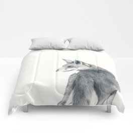 Red fox in graphite Comforters