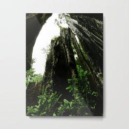 Redwoods #4 Metal Print