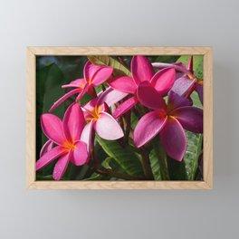 Pink Plumerias IV Framed Mini Art Print