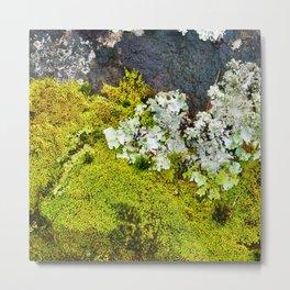 Tree Bark with Lichen#8 Metal Print