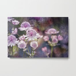 Textured Astrantia Metal Print