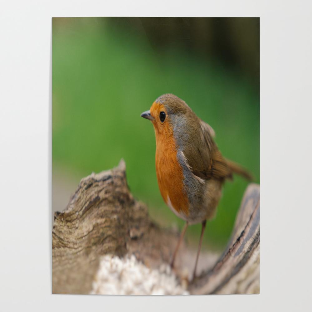 Robin Redbreast Poster by Rawshutterbug (POS6752435) photo