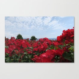 South of France red flowers on sunny sky background Canvas Print