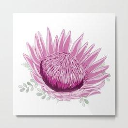 Pink Waratah - Australian Wildflower Metal Print