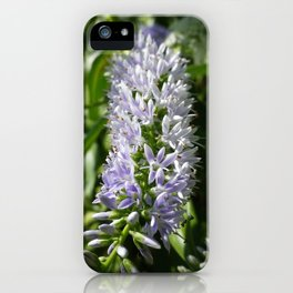 LAVENDER BLUE HEBE FLOWER iPhone Case