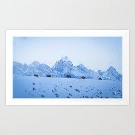 Winter Bison Art Print