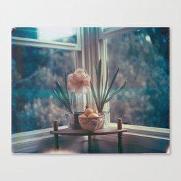 Amaryllis with hyacinth and meyer lemons Canvas Print
