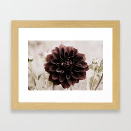 Dahlia - solitaire 122 Framed Art Print