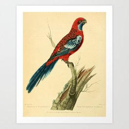 """The Splendid Parrot"" by Sarah Stone, 1790s Art Print"