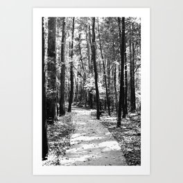 Path Through the Trees Art Print