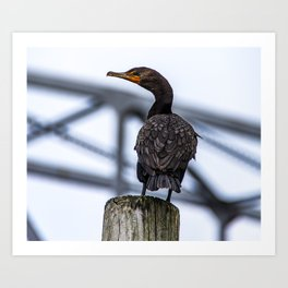 Cape Cod Canal Cormorant Art Print