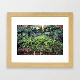 Organic, California Grown Kale Framed Art Print