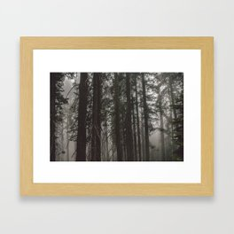 SEQUOIAS Framed Art Print