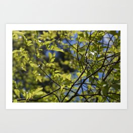 This Is Nature Art Print