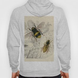 Naturalist Bee And Wasps Hoody