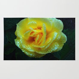 Early Morning Rose (Rosaceae) Rug