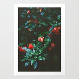 Pomegranate Study, No. 1 Art Print