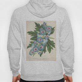 Delphinium Wseo Coelestinum Vintage Botanical Floral Flower Plant Scientific Hoody