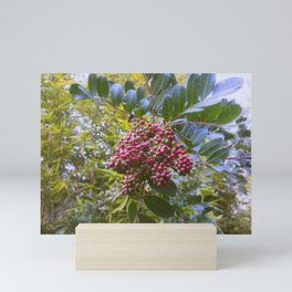 Coffee Berries Mini Art Print