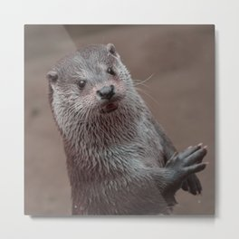 sweet young OTTER Metal Print