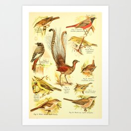 William Playne Pycraft - A Book of Birds (1908) - Plate 24: Some Perching- or Song-birds Art Print