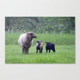 Lamb Love Canvas Print