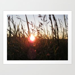 Meadow in sunset Art Print
