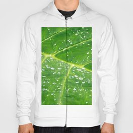 Morning Dew Hoody
