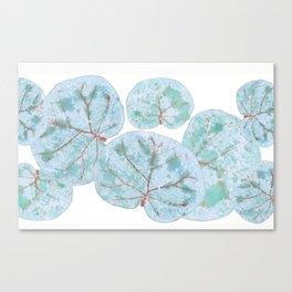 Sea Grape Tropical Leaves Canvas Print