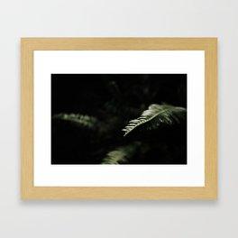 sword fern 1 Framed Art Print