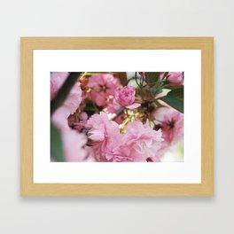 Cherry Blossoms, I Think Framed Art Print