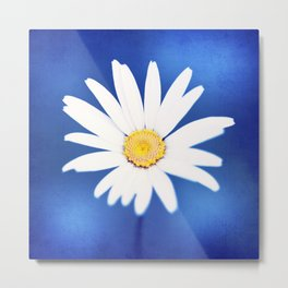 Royal Blue Yellow White Daisy Flower Photography, Bright Colorful Nature Photo Metal Print