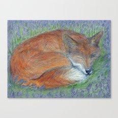 A Sleepy Fox  Canvas Print