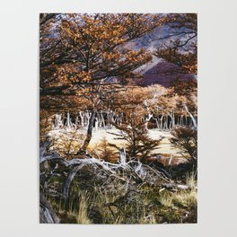 Fall in Patagonia, Argentina Poster