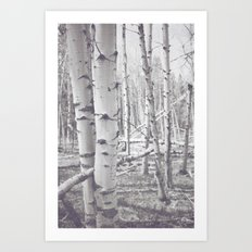 Black and White Aspens Art Print