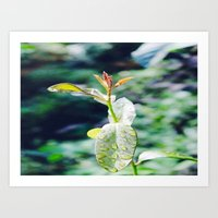A Beauty of Nature Art Print