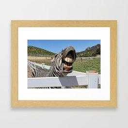 Smiling Zebra Framed Art Print