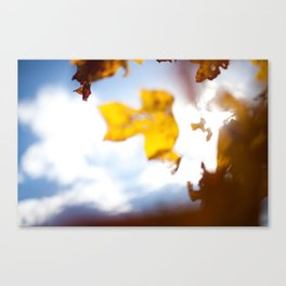 HOME: EARLY OCTOBER, YARD TREES Canvas Print