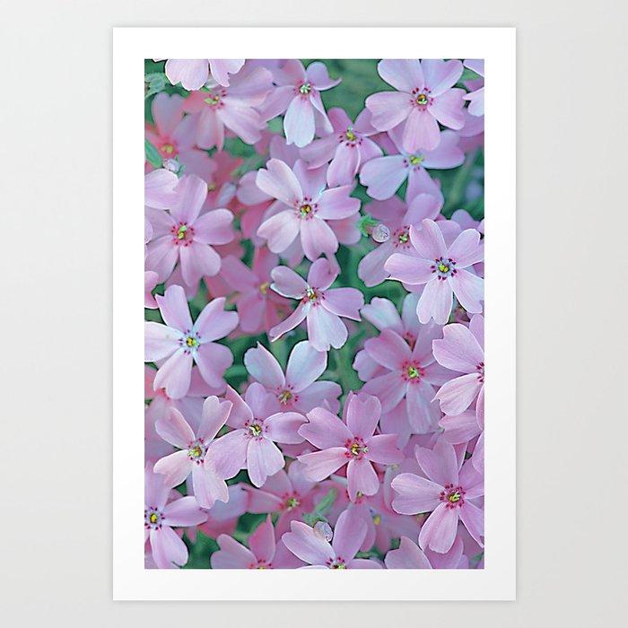 Flower Carpet(63) Art Print