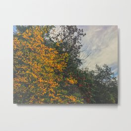 Autumn Sky Trees Metal Print