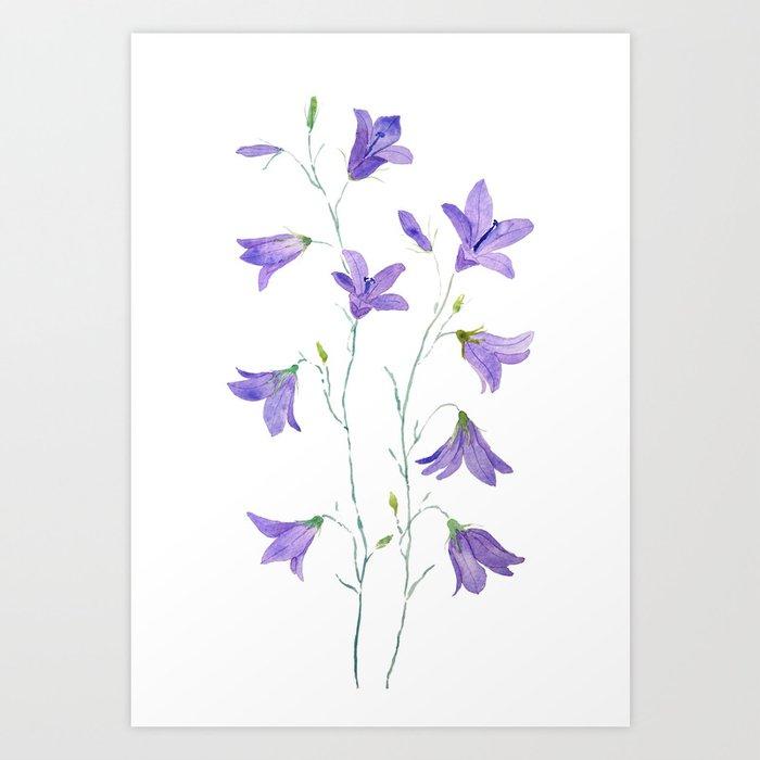 purple wildflower harebell watercolor Art Print
