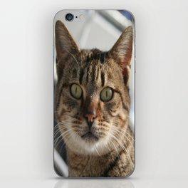 Beautiful Eyed Tabby Cat  iPhone Skin