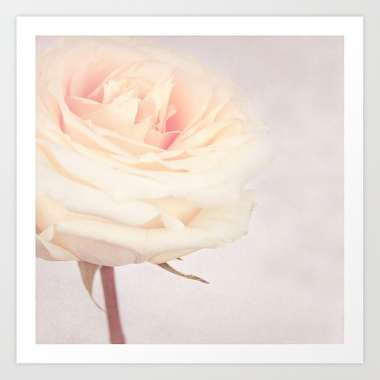 GRAZIE - White Wedding Rose Art Print