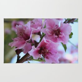 Peach Tree Blossom Close Up Rug