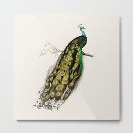 Peacock Royale Metal Print