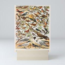 Adolphe Millot - Oiseaux espèces utiles 01 - French vintage ornithology poster Mini Art Print