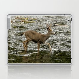 Young Buck Crossing The River Laptop & iPad Skin